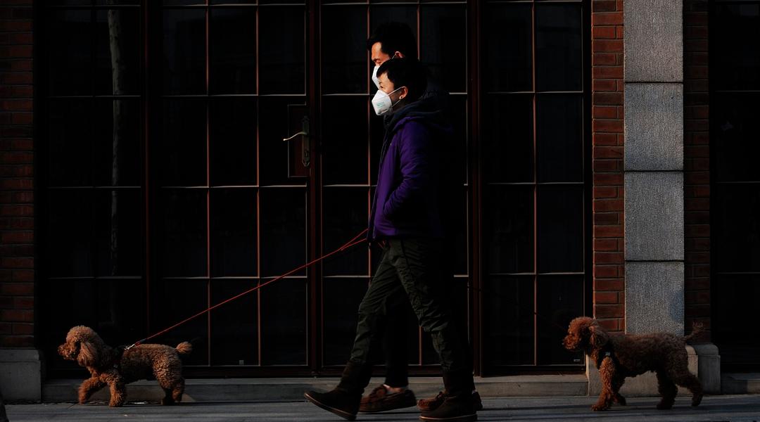 Lockdown, achatar a curva, pandemia: o que significam essas palavras?